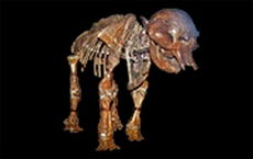 The world's smallest elephant, Elephas falconeri, from the middle-Pleistocene of Sicily
