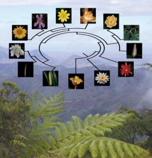 Evolutionary Tree for Flowering Plants