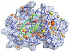 Penn Researchers Probe Proteins