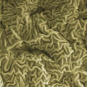 Scientists create wrinkled 'skin' on polymers