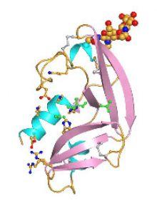 Amphinase Molecule