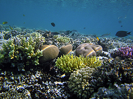CO2 hurts reef growth