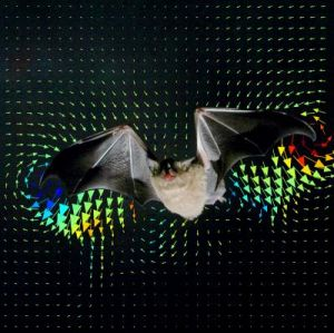 Cover of Science -- A Bat, Glossophaga soricina