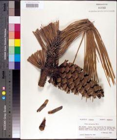 Deep South Plant Specimen Imaging Project
