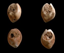 Discovery of oldest human decorations -- thought to be 82,000 years old