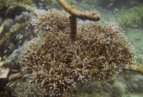 Electricity Revives Bali Coral Reefs (AP)