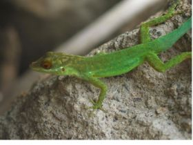 Global Survey of Lizards Reveals Greater Abundance of Animals on Islands Than on Mainland Ecosystems