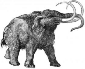 Hair Untangles Woolly Mammoth Puzzle