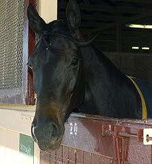Horse gut reveals new bacteria