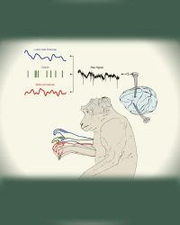 Illustrating Monkey Arm Movements