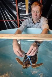 Light sticks may lure turtles to fishing lines