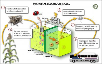 Microbial Electrolysis Cell