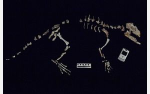 Missing Link Between Whales and Four-Footed Ancestors Discovered
