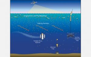 Ocean's 'Twilight Zone' May Be a Key to Understanding Climate Change