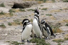 Penguins march into new park