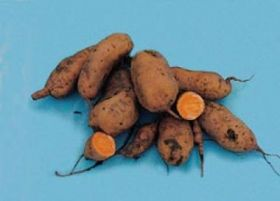 Sweet potato shines as new promise for small enterprise and hunger relief in developing countries