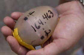 Telemetric Egg