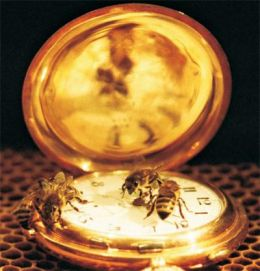 The social life of honeybees coordinated by a single gene