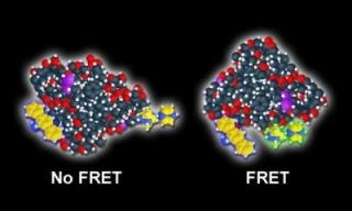 FSU researchers make observing cell functions easier