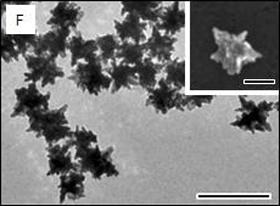 Gold nanostar shape of the future
