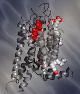 Newly Solved Structure of the Human A2A Adenosine Receptor