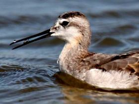 Scientists solve gravity-defying bird beak mystery