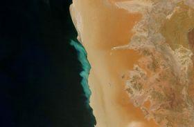 Bacteria detoxify deadly seawater