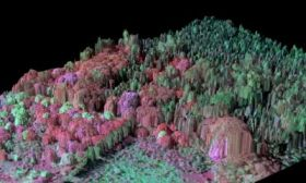 3-D Imaging of Invasive Tree Species