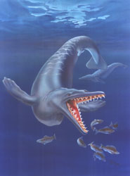 Rare publishing achievement for student provides new insights into the fossil record of whales