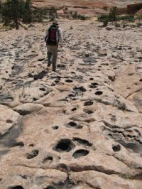 'A dinosaur dance floor': Numerous tracks at Jurassic oasis on Arizona-Utah border