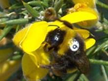 Bee smart, bee healthy