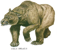 Drawing of a cave bear