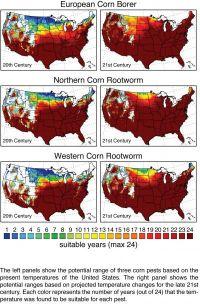 Corn Pests Media