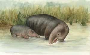 Early elephant 'was amphibious'