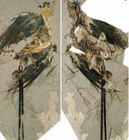 New fossil bird found
