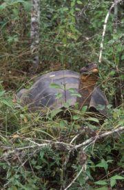 Hybrid Tortoise on Volcano Wolf