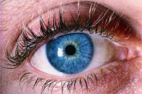 'Lazy eye' discovery of how an old gene learns new tricks