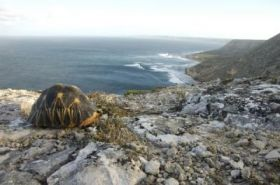 Madagascar's tortoises are crawling toward extinction, groups say