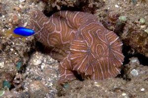 New Anglerfish