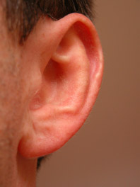 New findings contradict a prevailing belief about the inner ear