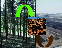 Put the Trees in the Ground: A solution for the global carbon dioxide problem?