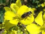 Pollinator decline not reducing crop yields just yet