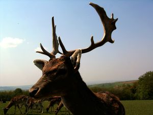 Stem cells at root of antlers' branching
