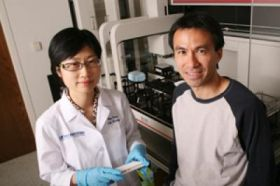 Protein thought to promote cancer instead functions as a tumor suppressor