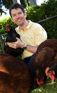 Research reveals the origins of chooks