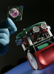 Robot with a Biological Brain: new research provides insights into how the brain works