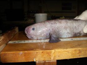 Scientist discovers six new species of deep sea fish