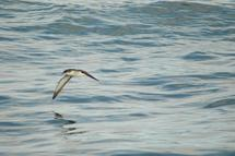 Seabird research tracks ocean health