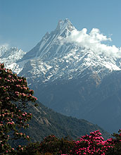 Sedimentary records link Himalayan erosion rates and monsoon intensity through time