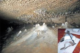 Small White Stalagmites Lining Caves in Southwestern Illinois